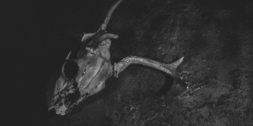 cropped-deer-skull_5.png